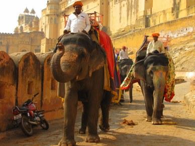 elefantejaipur