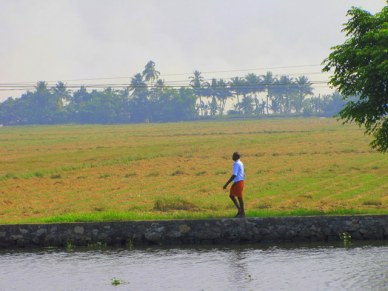 backwaters do kerala