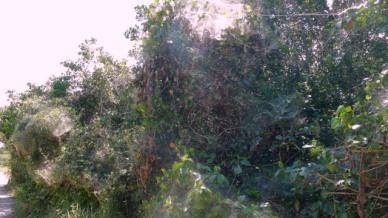Teia de aranha Parque Estadual Paulo César Vinha