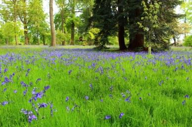 Bluebells Daytrips a partir de Londres
