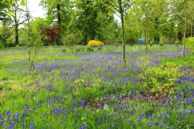 Jardim Htafield House bluebells Daytrips a partir de Londres