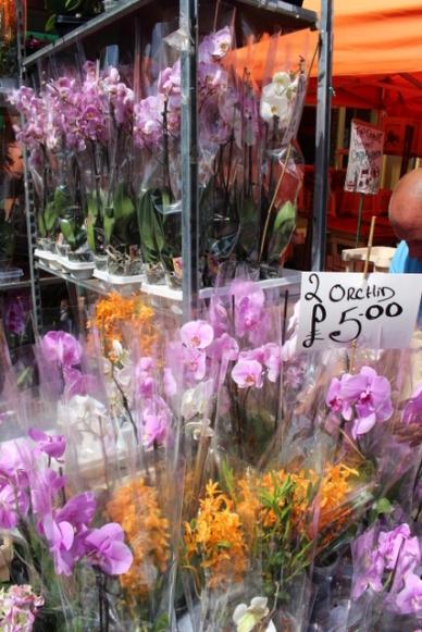 Orquideas Mercado de Flores
